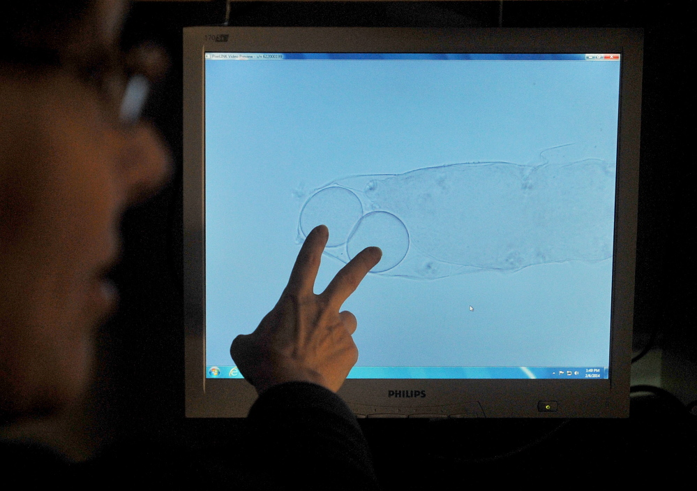 TARDIGRADES: Professor Emma Creaser points to a microscope monitor showing a tardigrade shedding its skin with two eggs under a microscope Thursday at Unity College. The tardigrade naturally leaves the eggs behind in the skin to be hatched.