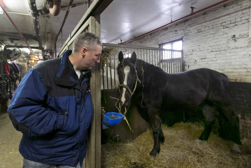 Carriage horse owner Stephen Malone looks in on Tucker in his stall at New York's Clinton Stables, the largest of the city's barns. The stables have no outdoor areas, so the horses must spend all of each day either in their stalls or in harness on the street.