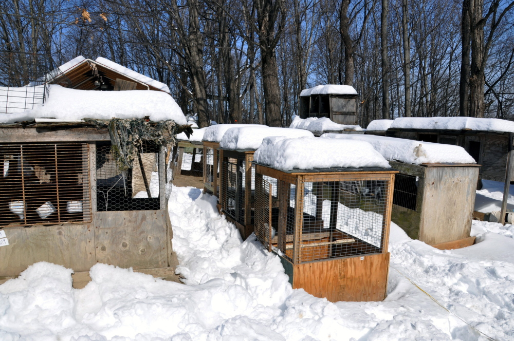 "This photo provided by the ASPCA shows ""Operation Angry Birds"" in Ulster County, N.Y., on Sunday."