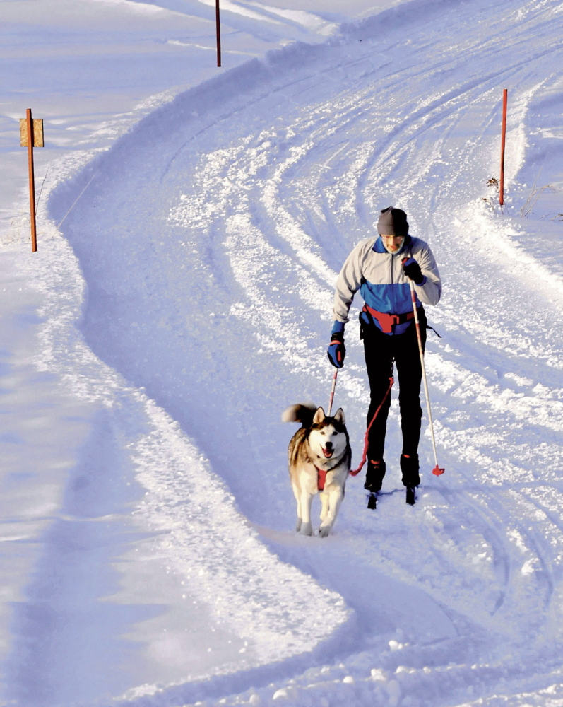 "TEAMWORK: Jim Love and his Siberian huskie named Nakita get some exercise and fresh air on a trail in Pittsfield recently. The two are skijoring, a Norwegian sport in which a dog is tethered to skier and the pair work together. ""We go out regularly on these trails,"" Love said. ""She likes to run and keep the momentum and I like to ski."""