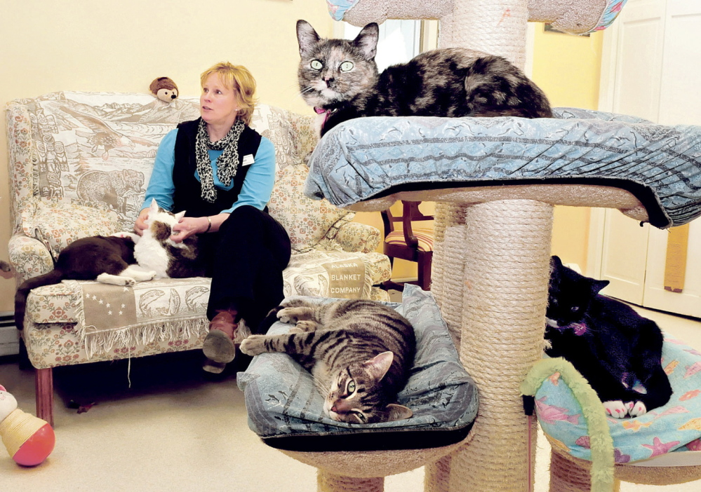 PLENTY OF CHOICES: Heidi Jordan, executive director of the Franklin County Animal Shelter, surrounded by cats Tuesday, speaks about the Empty the Shelter event. From this Thursday through Saturday, cats and dogs are available free or for reduced adoption fees at the Industry Road shelter.