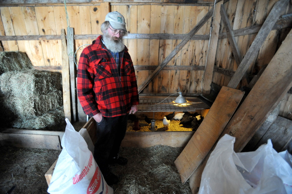 cluck work: Dan Charles stands in a section of his barn that houses his 8-week-old chicks at his home in Mercer on Friday.
