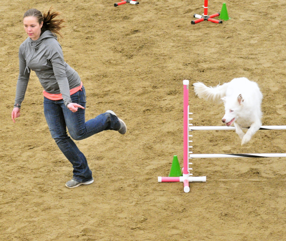 WHITE LIGHTNING: Katie Anderson, of Freeport, leads her border collie Denali over a hurdle Saturday during a dog agility contest in West Gardiner. Owners had to run their dogs through tunnels and over hurdles on the course as quickly as possible.