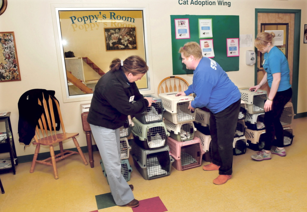 PREVENTATIVE: The Humane Society Waterville Area has temporarily closed after a ringworm infection that came with two dogs who were dropped off at the shelter last week. Operations manager Pam Nichols, left, outreach coordinator Margi Hayes and volunteer Molly Hodgkins use bleach to disinfect cat cages on Thursday.