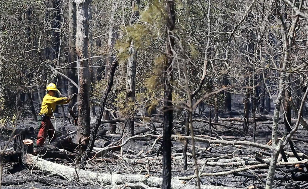 A crew from the New Jersey Forest Fire Service cuts down burned trees along Dividing Creek Road in Downe Township, N.J., Thursday.