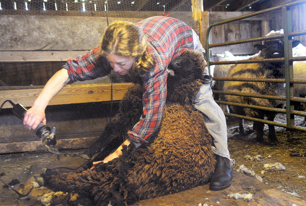READY FOR SUMMER: Emily Garnett of Jefferson sheers a ewe Saturday at the Hyde Farm in Pittston. The wool will be used as insulation for a barn.