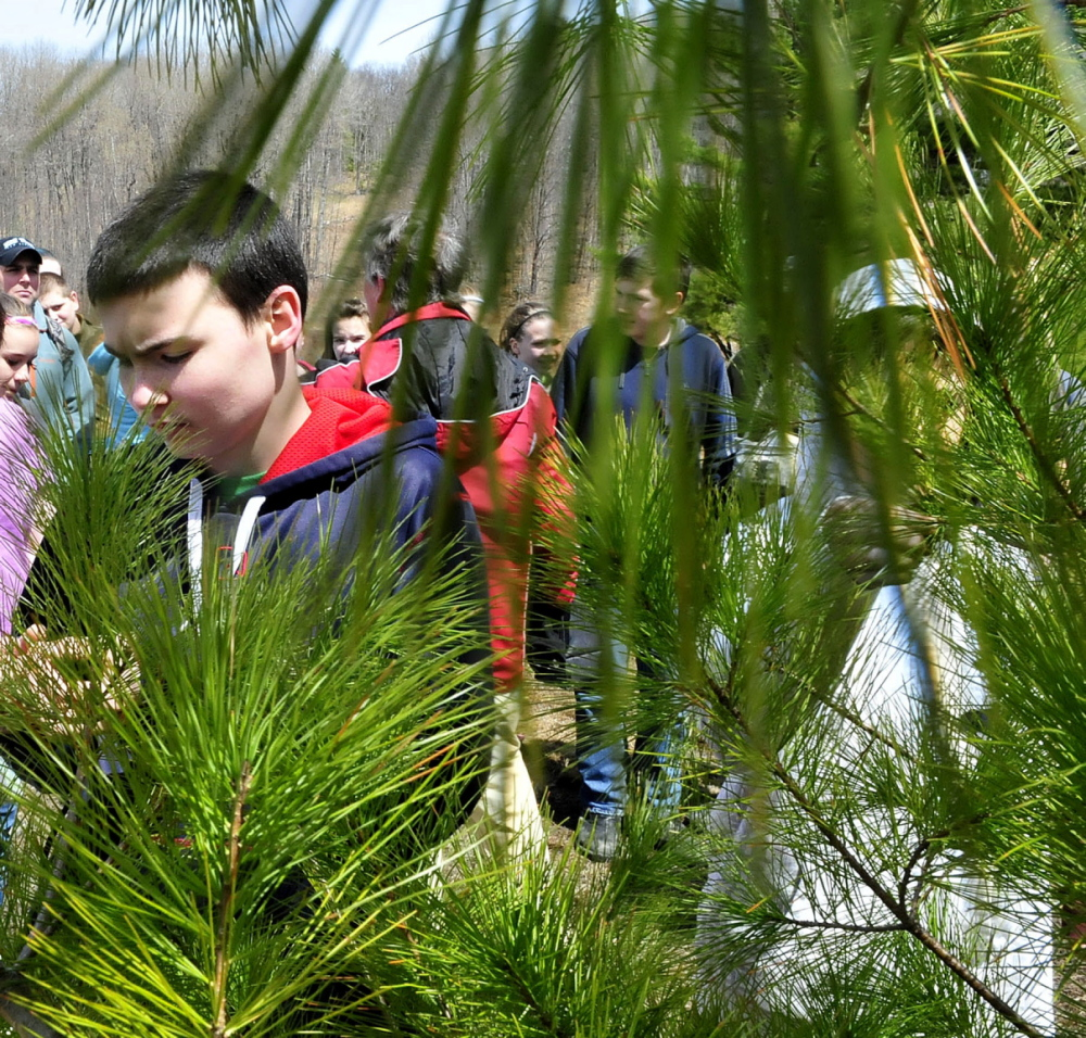 CLOSER LOOK: Warsaw Middle school student Dan Shute and other students from the Pittsfield school examines a small pine tree on a trail at the Quarry Road recreation Area in Waterville on Tuesday.