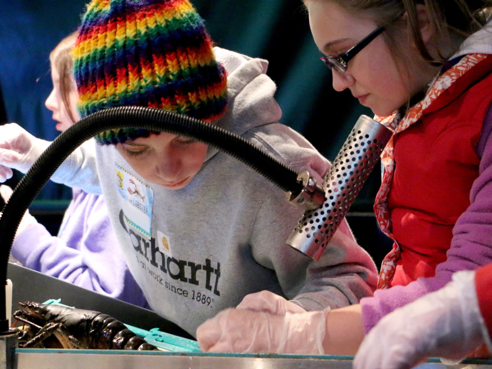 Skowhegan Middle School students Ryan Patton and Haley Michaud measure a lobster during a recent trip toLabVenture at the Gulf of Maine Research Institute in Portland.