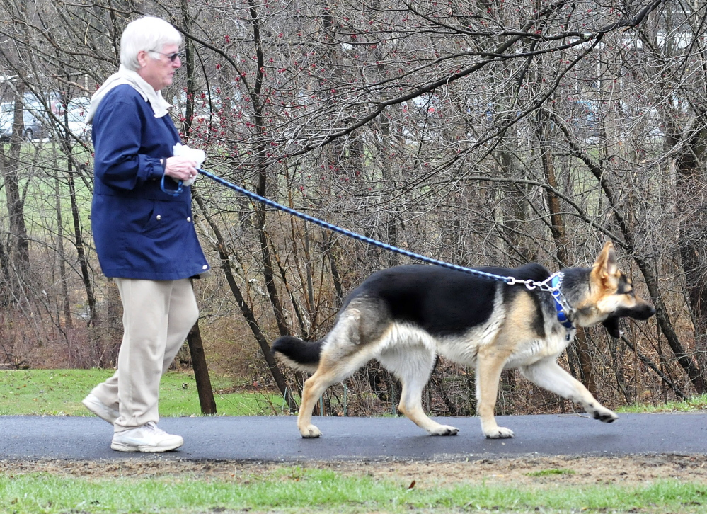WALKIES: Alice Ladd walks her dog Prince in Waterville on Thursday.