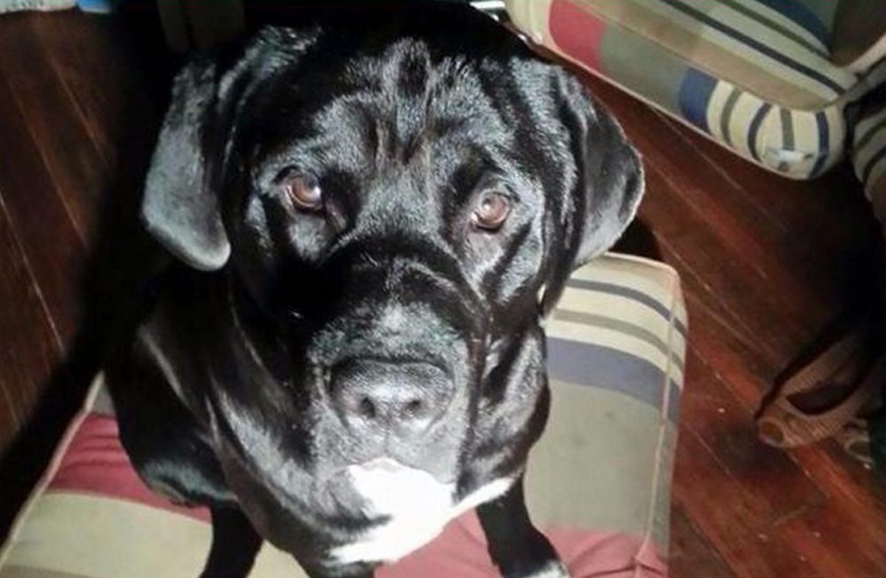 Facebook photo Arzy, a dog that belonged to a man who is originally from Portland, was shot and killed by a Louisiana police officer in April.
