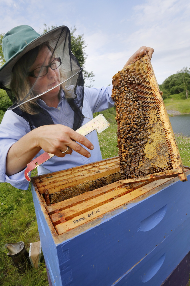 "Erin MacGregor-Forbes, a master beekeeper, checks her hives in Portland. Many plants touted as ""bee-friendly"" are pretreated with a class of pesticides shown to harm and kill bees and other pollinating insects, according to a study to be released Wednesday at a press conference in Portland."