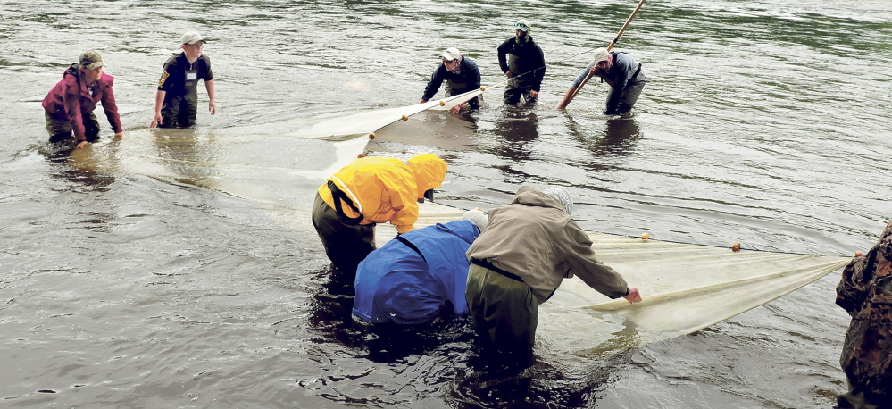Teenagers use a seine net to try to capture fish in the Kennebec River during a Maine Trout Unlimited Trout Camp at Evergreen Camps in Solon on Thursday. At left are Emily McLean of Fairfield and Noah Cummings of Sidney.