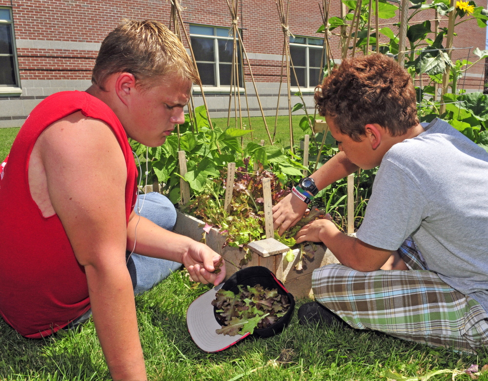 Tyler Hyde, left, and Ethan Overlock pick lettuce Friday with other members of the Augusta Boys and Girls Club at Cony High School.