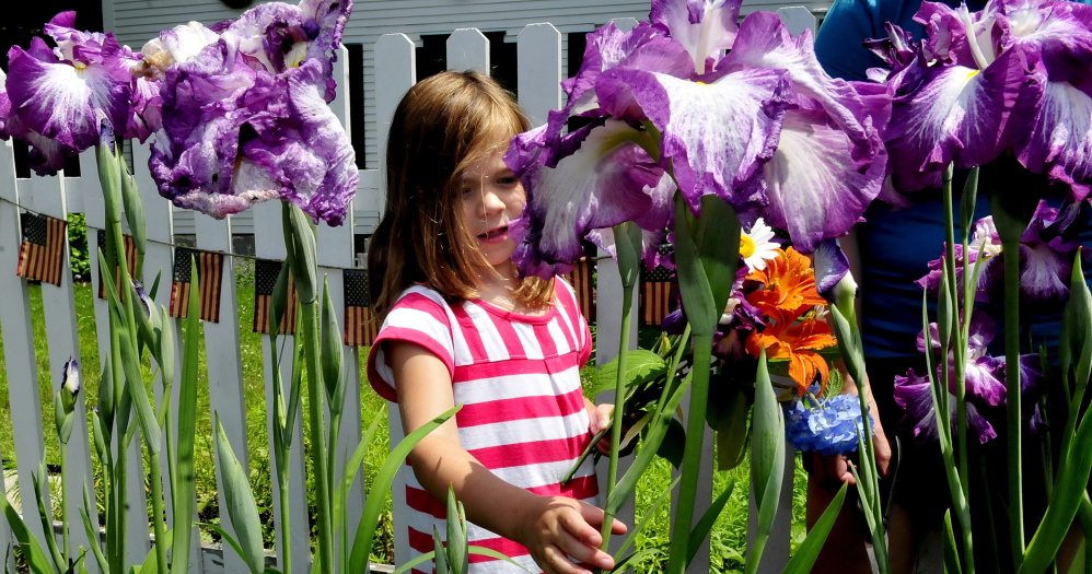 BELGRADE,ME.-July 8: Adelle MacLeay picks flowers in a colorful  garden on Main Street in Belgrade on Tuesday, July 8, 2014. (Photo by David Leaming/Staff Photographer)