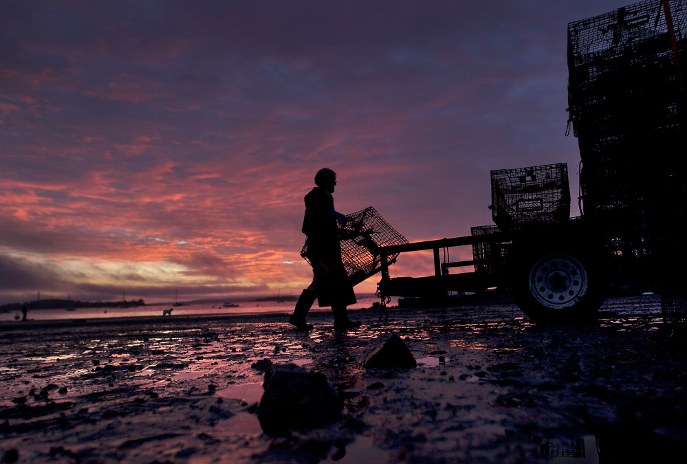 A lobsterman loads traps onto a trailer at sunrise in Falmouth. State lobster biologist Carl Wilson said the state's 2014 lobster season is off to a slow start, due to the cold winter and spring that likely held back molting.