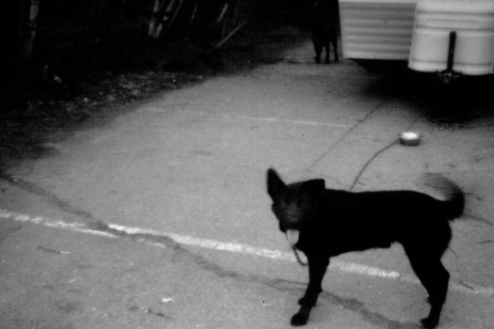 A dog chained to a trailer on Passamaquoddy tribal land, as seen in this pinhole image.