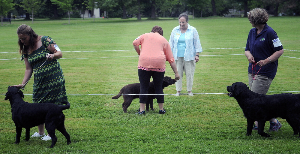 Handlers show Labrador retrievers Sunday during the UKC Acadia Belgian Shepherd Dog Club dog show at Capitol Park in Augusta.