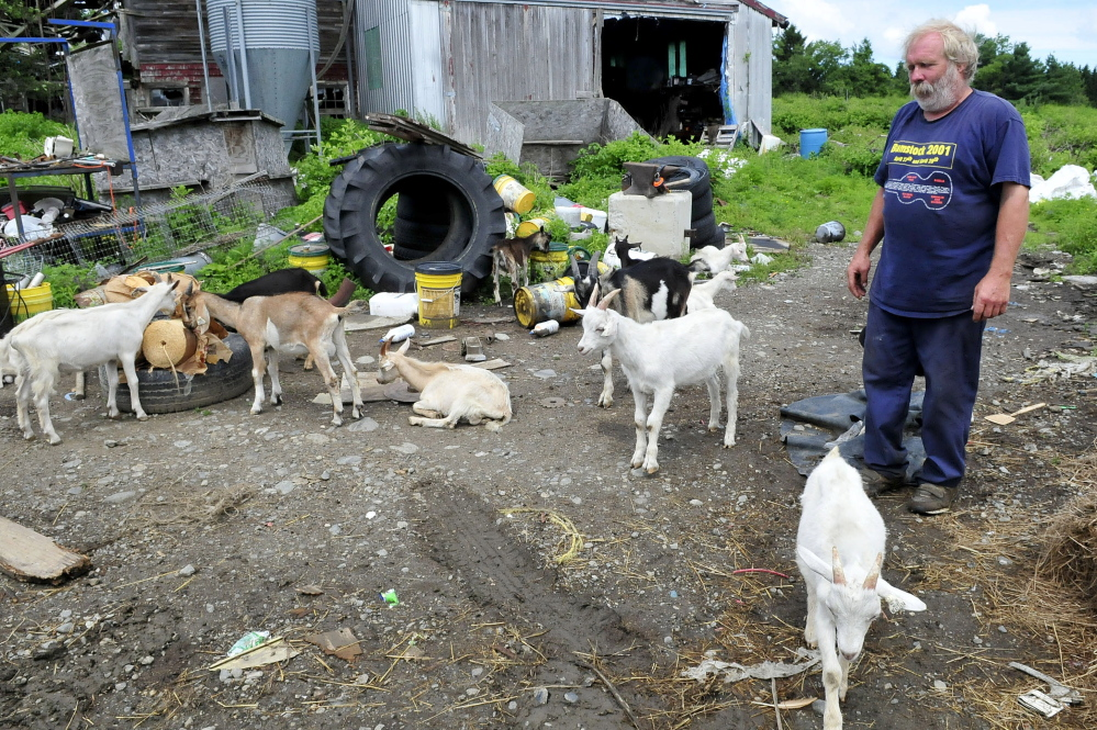 Farmer Mark Gould and his goats congregate in the yard of his farm in Sidney on Thursday. The goats wandered off the property Wednesday night after two other excursions. Gould will be charged with animal trespassing, the local animal control officer said.