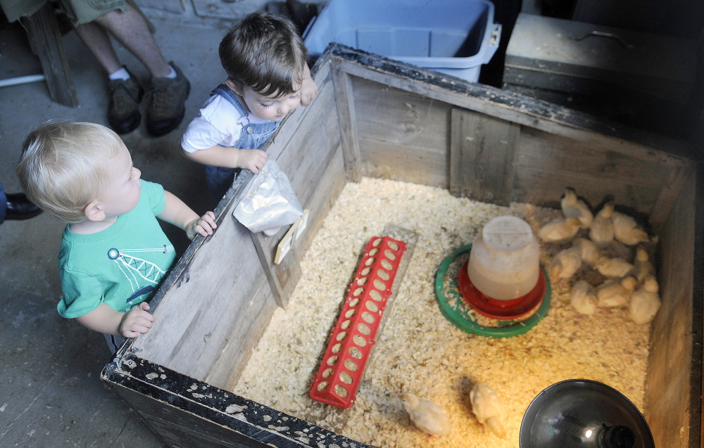 Fintan LaPointe, left, and Dorian Pillsbury survey turkey chicks Sunday, July 27, 2014, at Butting Heads Farm in Gardiner during Open Farm Day. The one-year-olds checked out the critters, implements and barns at the farm.
