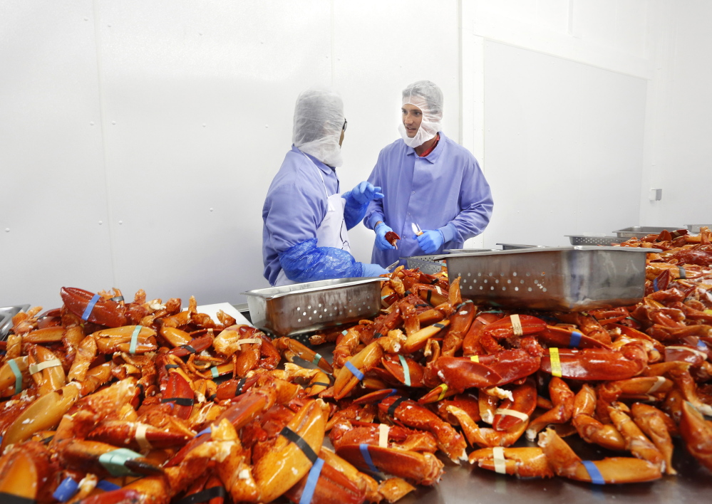 Luke Holden, right, processes cooked Maine lobster claws at his Cape Seafood facility in Saco. He also owns 13 Luke's Lobster restaurants, with locations in New York, Washington, D.C., and Philadelphia.