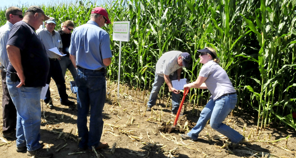Anne Donahue, of the Natural Resources Conservation Service, digs soil beside a cornfield Wednesday to determine soil health factors in a demonstration during the two-day Maine Farm Days agricultural trade show, held at the Misty Meadows farm in Clinton.