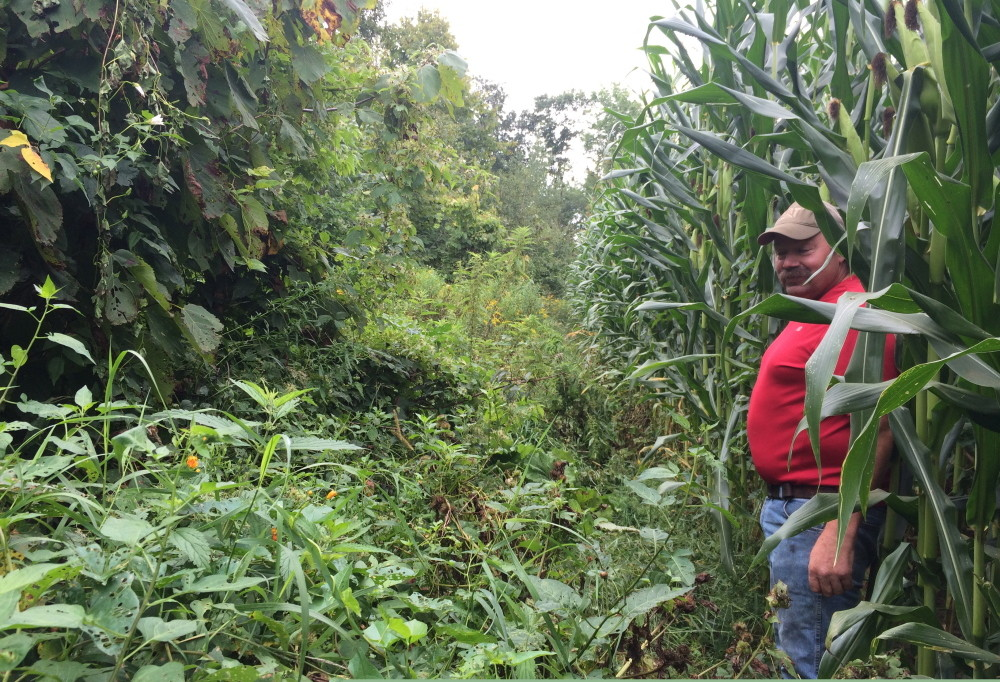 Jim Hilton stands next to his cornfield Tuesday on Sandy River Road in Norridgewock on a path that leads to the town-owned Oxbow Cemetery. Town officials say they are unable to reach the cemetery because the corn has taken over the path