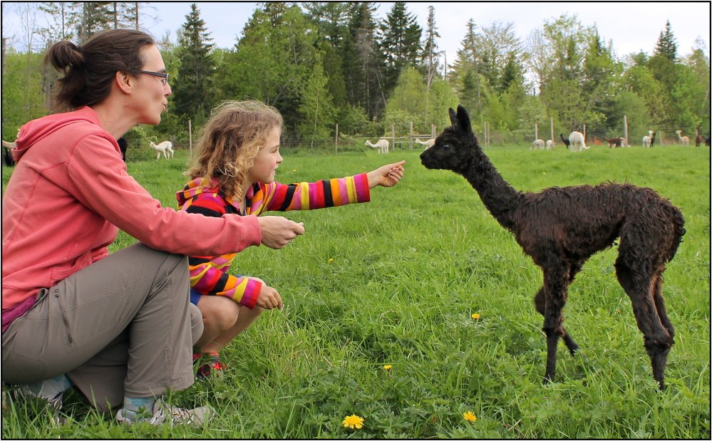 Amanda Jamison and daughter Hazel meet one of the youngsters at Bag End Suri Alpacas in Pittsfield, one of the optional farm stops available in Sebasticook Regional Land Trust's Farm & Habitat Tour on Sept. 13.  D. Dutton photo
