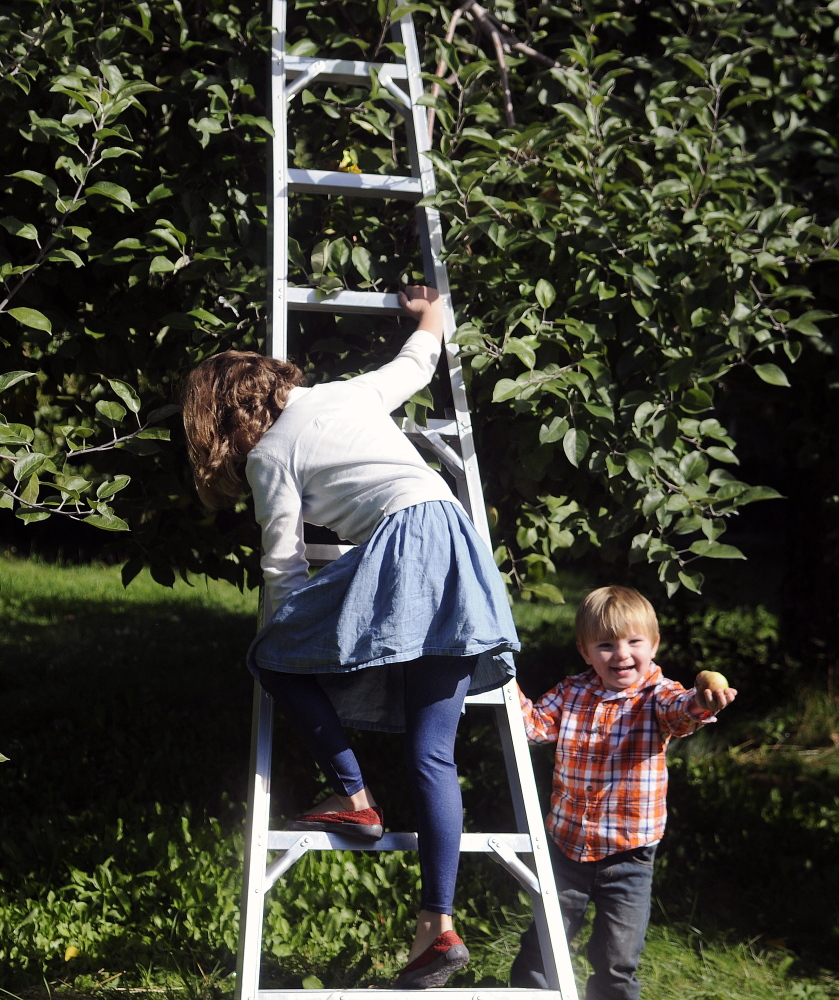 Jack Kennard, 2, of Augusta, clutches an apple he collected on Apple Sunday as his sister, Emily, 7, descends a tree at Bailey's Orchard in Whitefield. The Kennard family picks apples two or three times a year.