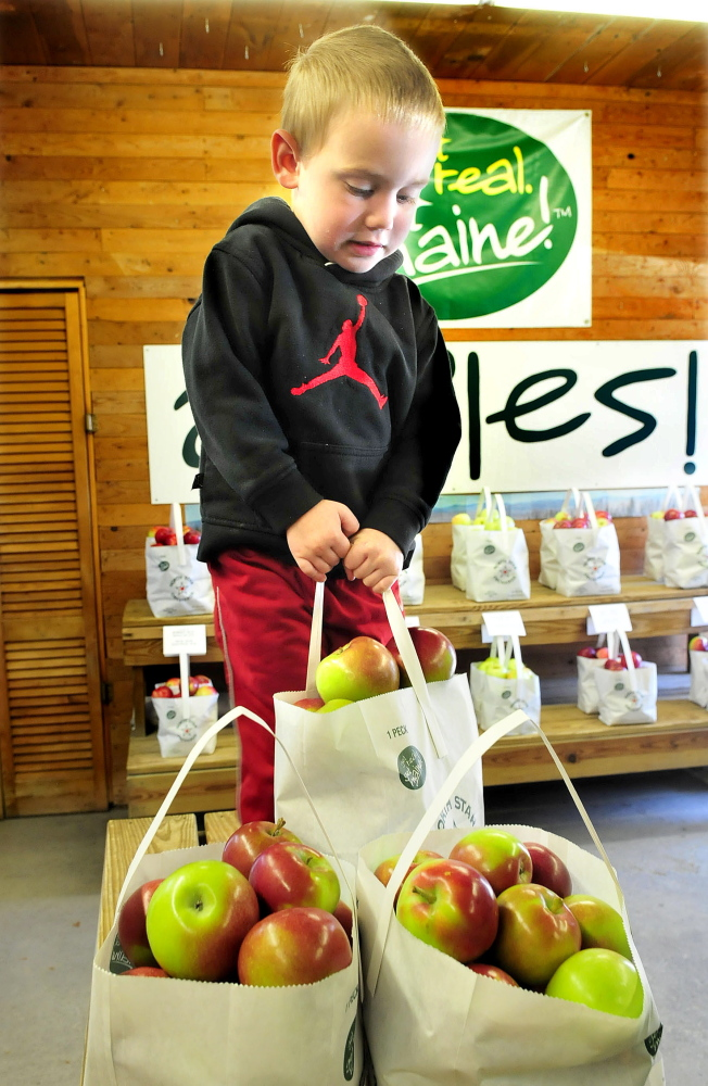 Landon Orff, 3, of Fairfield, struggles to lift a bag of apples he selected during the statewide Maine Apple Sunday held at the North Star Orchards in Madison.