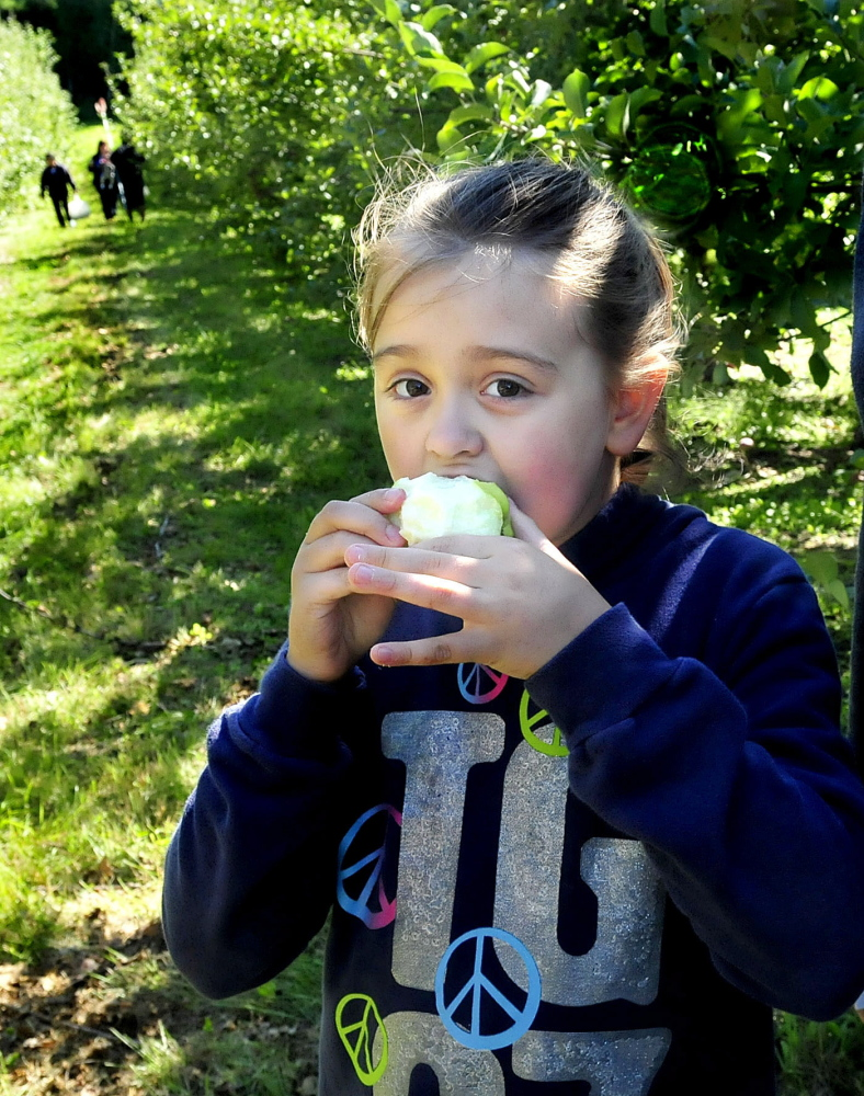 Abby Vernon chomps down on an apple she picked at North Star Orchards in Madison during the statewide Maine Apple Sunday.