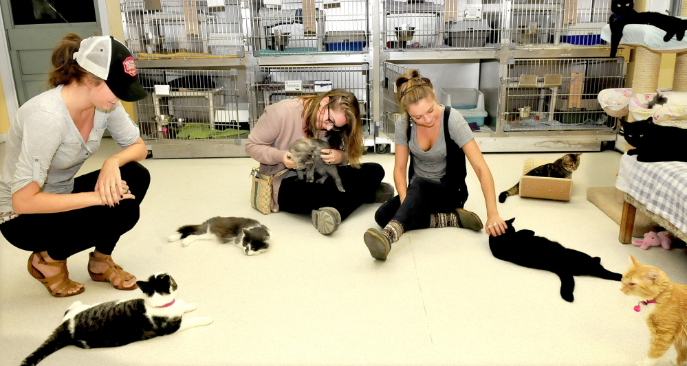 The Franklin County Animal Shelter has opened after being closed for two weeks because of a virus. Looking over cats available for adoption Monday are, from left, Thaley Halpin, Maggie Pearson and volunteer Mallory Lewis.