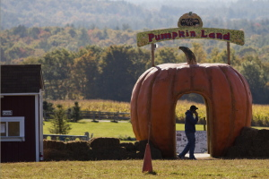 A man is silhouetted against the cutout of a pumpkin as he talks on his cell phone at Harvest Hill Farms in Mechanic Falls on Route 126 on Sunday, the morning after a hayride accident killed a 17-year-old girl.