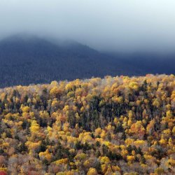 The sun shines on the changing foliage along the Kancamagus Highway in Lincoln, N.H., in New Hampshire's White Mountains. Officials say tourists will spend upwards of $1 billion to catch a glimpse of the red, yellow and orange hues on the trees, and the windfall is steadily rising as the economy regains strength.