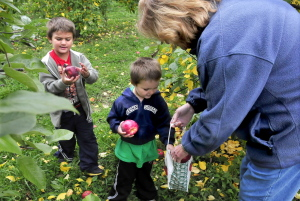 "Izaaha York, left, and his brother Tysen fill a bag with apples for their great-grandmother Sandra Buckmore at Lemieux's Orchards in Vassalboro on Sunday. ""This has been a fun day for them,"" Buckmore said."