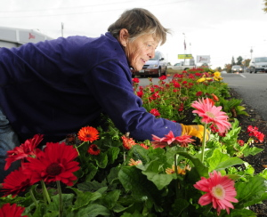 CAP.cutline_standalone:Deborah Plengey cleans up around flowers at Al's Certified Auto Repair just before a storm starts Tuesday in Augusta. Plengey and a co-worker from Raven Tree Gardens had just planted 1,000 tulip bulbs around the State Street business.