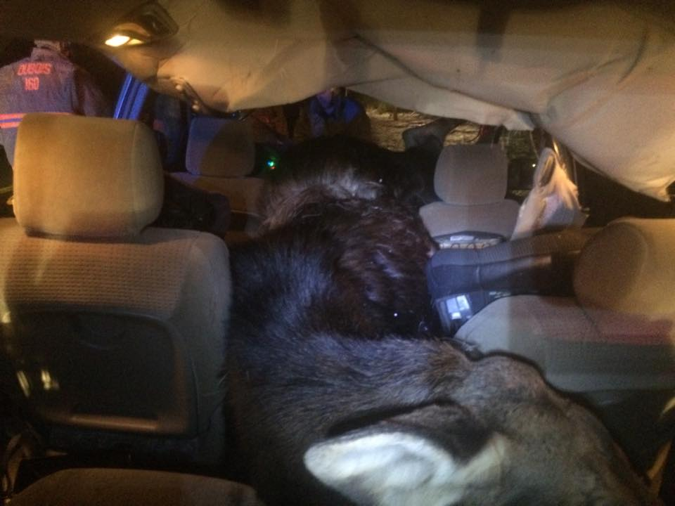 Mark Forino of Presque Isle, was unable to avoid a moose and struck it, killing it.  The moose crashed through the windshield into the passenger compartment of a 2006 Toyota Sienna van, narrowly missing Forino Sunday night. Contributed photo by the Maine State Police.