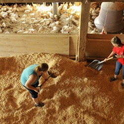 Emily Greaney, 17, left, and her mother Tracey, right, spread wood chips through the barn as they prepare to extend the turkey coop at the family farm in Mercer on Sept. 1, 2014.
