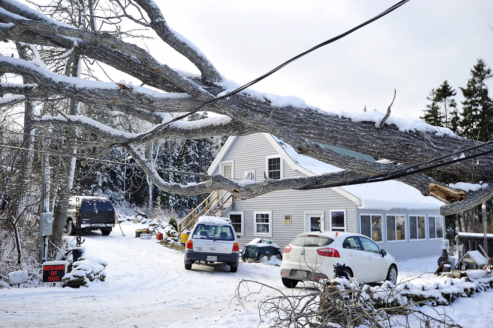 HARPSWELL, ME - NOVEMBER 28: A large tree, one of many, fell across power lines from the high winds and snow in the recent storm cutting off electricity to homes on Washburn Road in Harpswell. Residents await the tree and electrical crews that will repair the damage. (Photo by Gordon Chibroski/Staff Photographer)