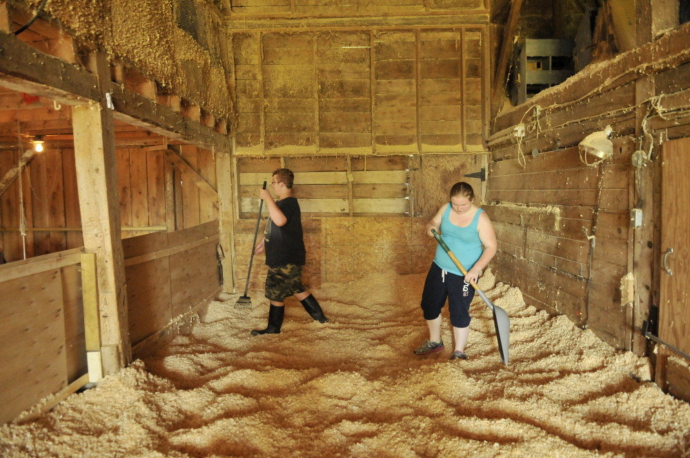 Emily Greaney, 17, right, spreads wood chips in the barn with the help of her brother Ben, 15, as they prepare to expand the turkey pen at the family farm in Mercer in September.