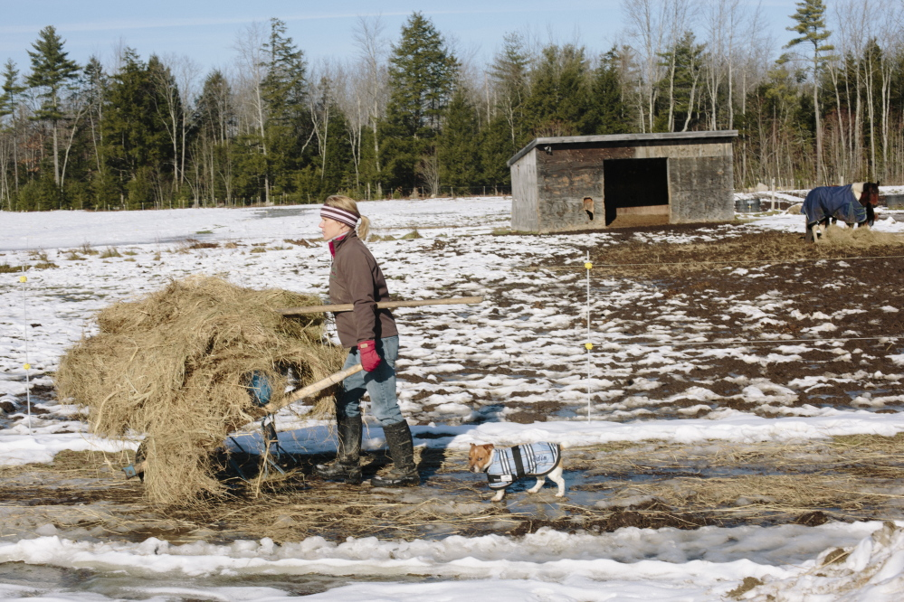 Rebecca Nelson carts a wheelbarrow full of hay to a horse pen, while Jack Russell Odin follows in Scarborough last week. Nelson recently tested positive for Lyme disease after years of symptoms.