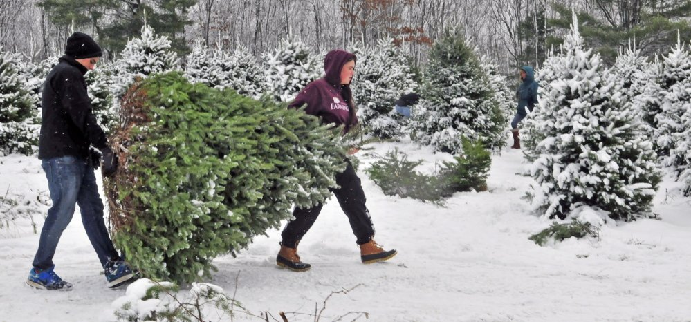 Central Maine Christmas Tree Farmers In Peak Of Season