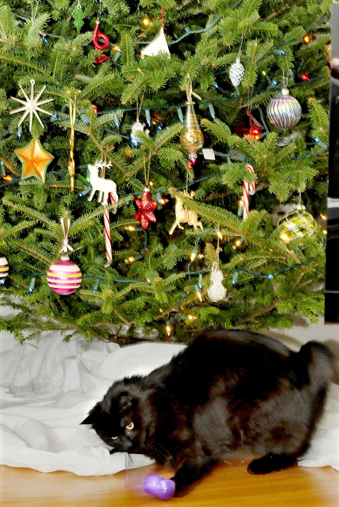 Staff photo by David Leaming Pip the cat bats a Christmas ornament that he knocked off a tree at the Amy Calder home in Waterville.