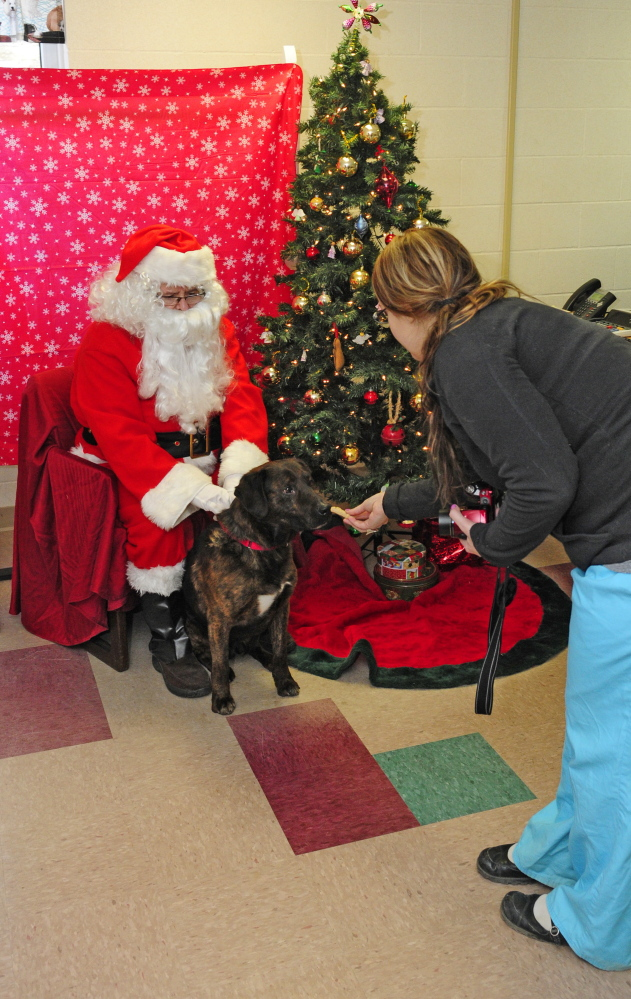 Donald Demeras, dressed as Santa Claus, poses with a Ashton, a shelter dog available for adoption, on Saturday while Amanda Thompson offers the dog a treat before she takes their photo at the Kennebec Valley Animal Shelter in Augusta.