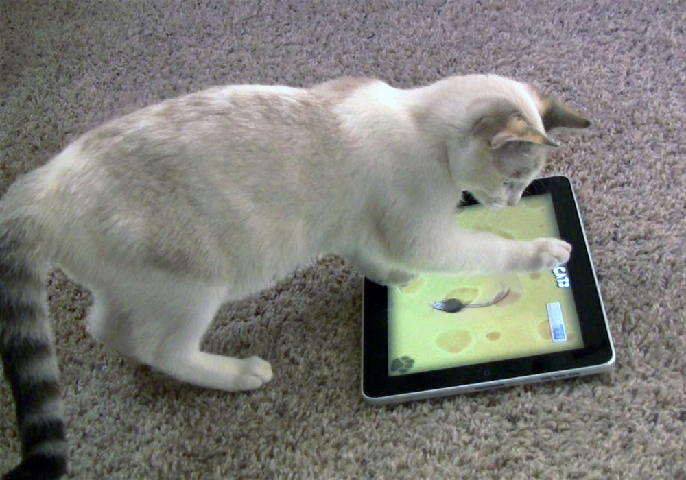 """This frame grab from video shows Maxine the cat playing """"Game for Cats"""" on an iPad in Valencia, Calif. If she gets bored, she can always switch to """"Catzilla."""""""