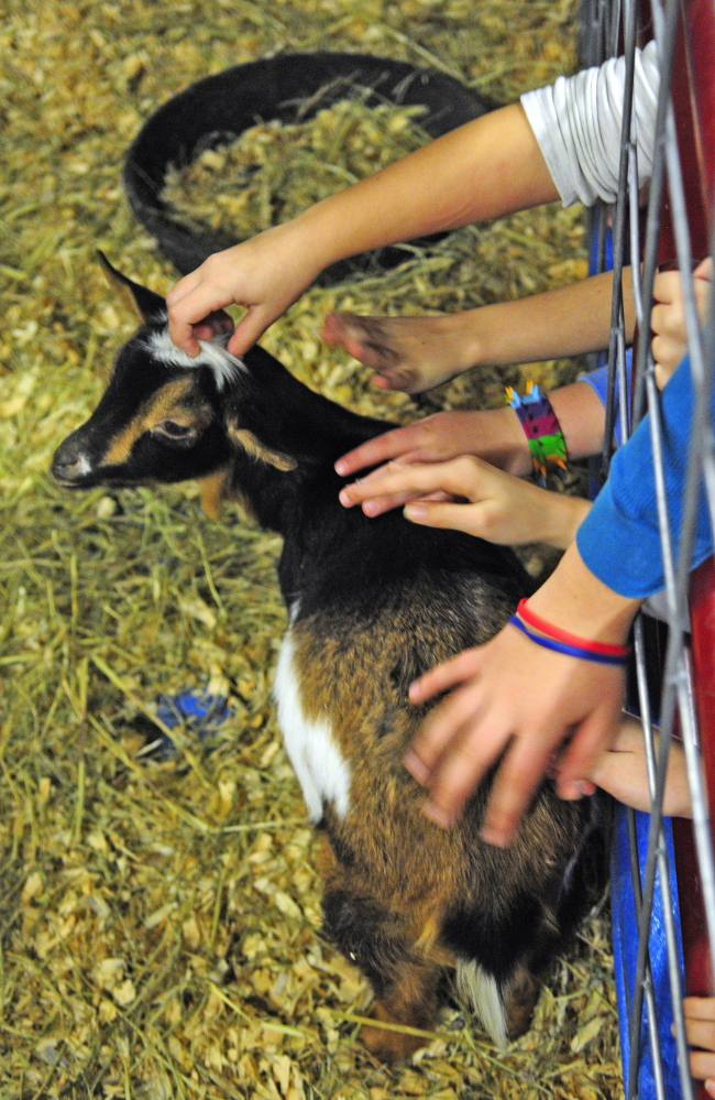 Schoolchildren reach out to pet a Nigerian dwarf goat Thursday during the 74th Annual Agricultural Trades Show at the Augusta Civic Center. Several goats from the Eliza-Rek Farm in Chelsea were on display at the show.