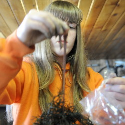 Katie Baker selects bait worms to be sold at her family's Pittston business, Baker's Smelt Camps, on Sunday. Anglers renting a shack purchase a bag of the worms to hook rainbow smelt.