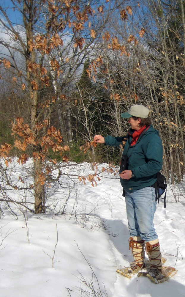Naturalist Lynne Flaccus will lead a guided nature walk at Sheepscot Valley Conservation Association's Stetster Preserve in Jefferson to celebrate Great Maine Outdoor Weekend on Saturday, Feb. 14.
