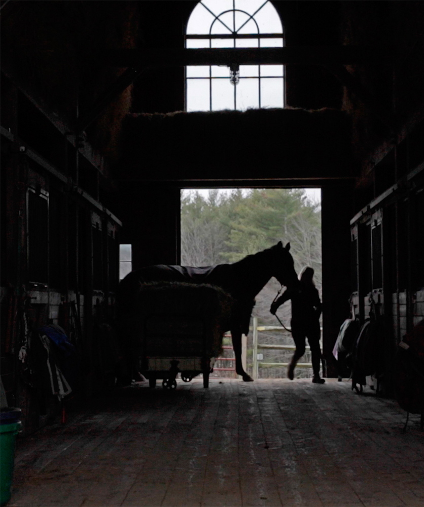 "Sarah Armentrout, who founded Carlisle Academy with her husband, leads a horse into the barn in Lyman. ""Because (the horses) are so big and carry you in this graceful, proud way, you do have that sense of pride when you're riding them,"" Armentrout said. Photos by Amelia Kunhardt/Staff Photographer"