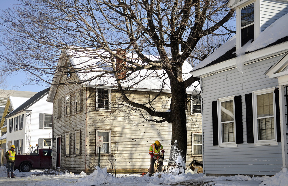 Grondin Construction employee Skip Jordan notches a maple tree Wednesday in the yard of a house on Perham Street in Augusta. The company is removing several trees on the street before razing four houses to make way for the new Capital Judicial Center parking area. The contractors hope to have the buildings entirely removed in a month and plan to begin demolition this week.