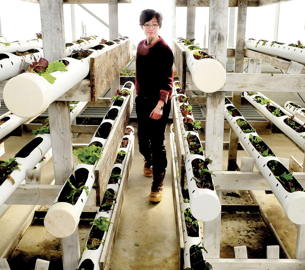 Unity College Assistant Professor of Agriculture Mary Saunders Bulan examines vegetable plants beginning to grow inside one of the campus greenhouses at the Half Moon Gardens/McKay Agricultural Research Station in Thorndike on Friday. Students raise vegetables for school dining services and campus landscaping.